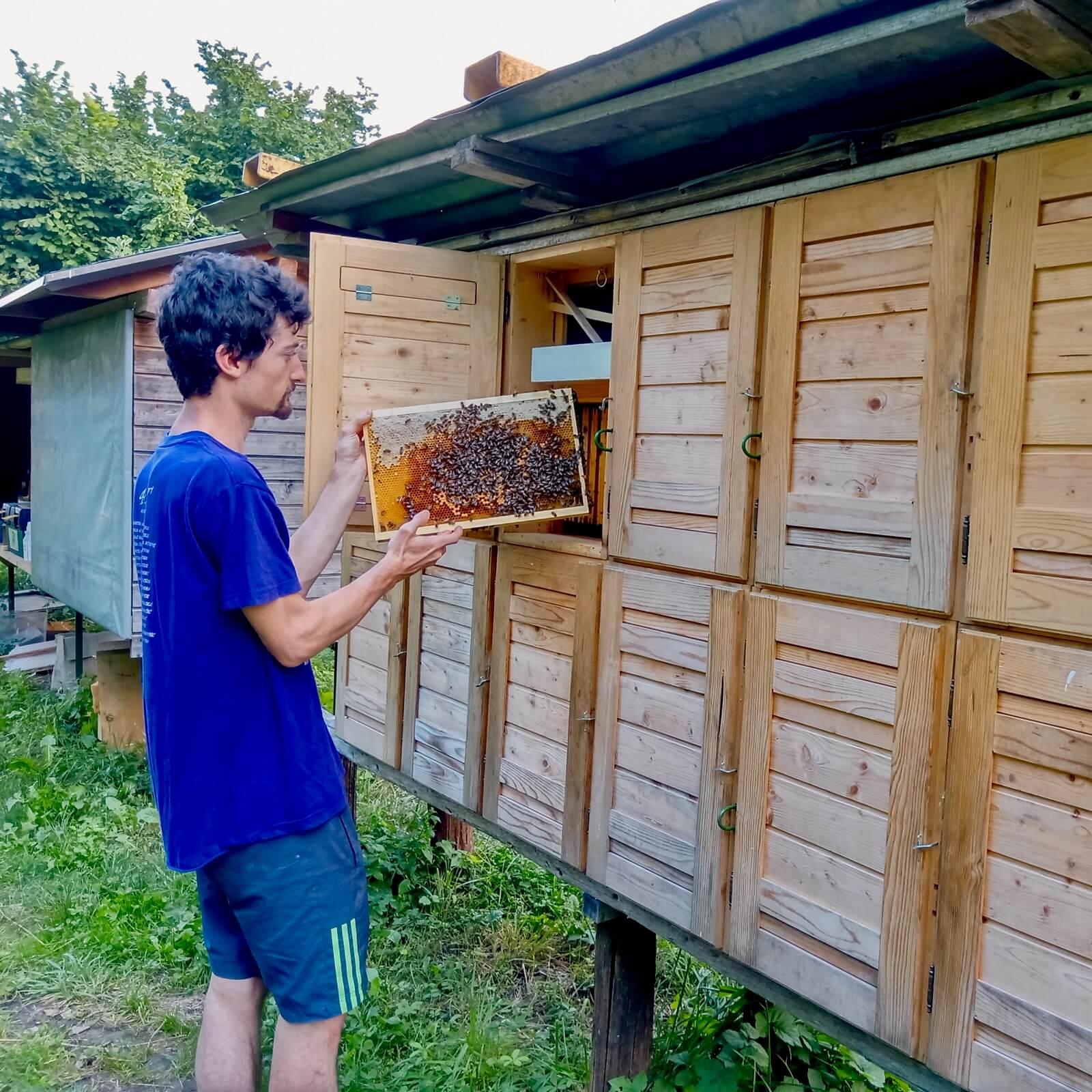 Čebelarstvo Jevšovar