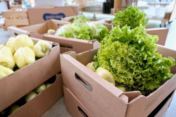 Naročanje zelenjave v Rifuzl